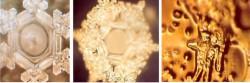 crystalscrop